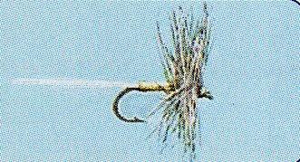 No.25 Caenis in Größe 18
