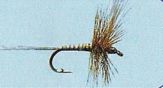 No.24 Rhitrogena Imago in Größe 14