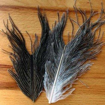 Ostrich Plumes Natur Grey - Flyscene-