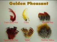 Goldfasanfeder verschiedene zur Auswahl