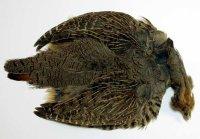 Metz Hungarian Partridge Natur Grey / Rebhuhnbalg Komplett Natur Grau