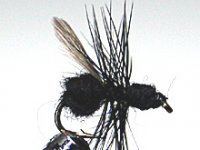 Black Flying Ant Gr.16  Nr.703/2