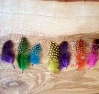 Perl-Huhn Federn (Guinea Feathers)