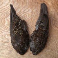 Grouse Wings Moorschneehuhn-Flügel Lagopus lagopus